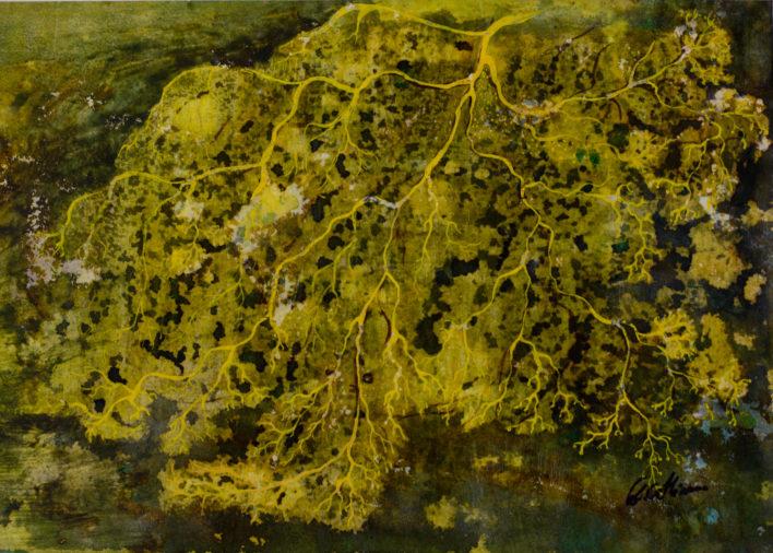 structuri-vegetale-acuarela-36x23-2010